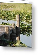 Everglades Pier Greeting Card