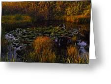 Everglades Pond Greeting Card