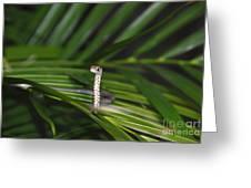 Everglades Racer Greeting Card