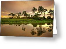 Everglades Sunrise Greeting Card