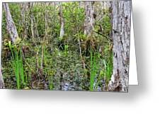 Everglades Swamp Two Greeting Card