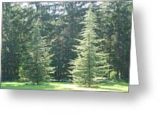 Evergreen Dance Greeting Card