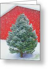 Evergreen In Winter #1 Greeting Card