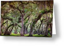 Evergreen Greeting Card