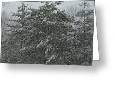 Evergreen Snowfall Greeting Card