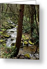 Evergreen Stream Ravine Greeting Card