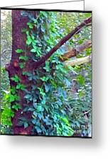 Evergreen Tree With Green Vine Greeting Card