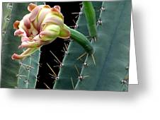 Every Cactus Flower Has It's Thorns  Greeting Card