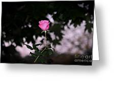 Every Rose Has Its Thorn Greeting Card