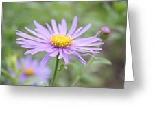 Everything Is Coming Up Daisies Greeting Card