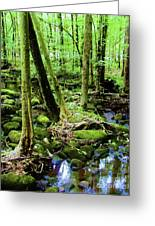 Evolution Of A Forest In Spring  Greeting Card