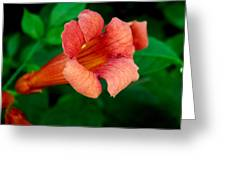 Evolution Of The Trumpet Flower II Greeting Card