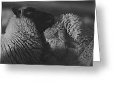 Ewe Talk A Greeting Card