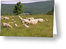 Ewe's Eye View Greeting Card