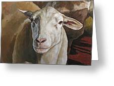 Ewes In The Paddock Greeting Card
