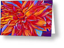 Exciting Red Dahlia Greeting Card