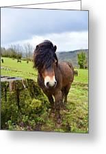 Exmoor Greeting Card
