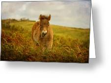 Exmoor Wild Pony Greeting Card