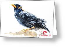 Myna Bird From Thailand Greeting Card