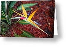 Exotic Bird Of Paradise Greeting Card