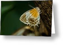 Exotic Butterfly On Tree Bark Greeting Card