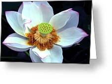 Exotic Lotus Greeting Card
