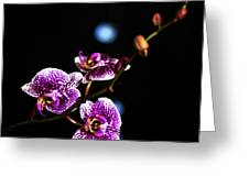 Exotic Orchid 6 Greeting Card