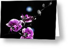 Exotic Orchid 6 V2 Greeting Card
