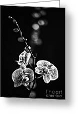 Exotic Orchid Bw Greeting Card