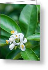Exotic White Flower Greeting Card
