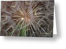 Experience The Dandelion Greeting Card