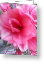 Exploding Pink Azaleas Greeting Card