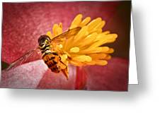Exploring A Flower Greeting Card