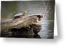 Exploring Turtle Greeting Card