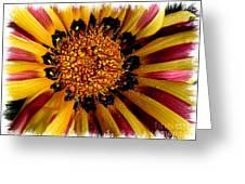 Explosion Of Color - Framed Greeting Card