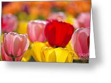Explosion Of Colors Greeting Card