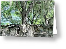 Exposed - Oak Roots Greeting Card
