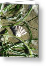 Exposed Shell Greeting Card