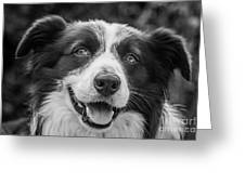 Expression Of A Border Collie Greeting Card
