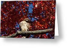 Expressive Hawk Greeting Card