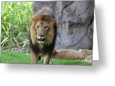 Expressive Male Lion Prowling Around In Nature Greeting Card