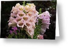 Exquisite Elegant English Foxgloves Greeting Card