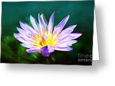 Exquisite Waterlily Greeting Card