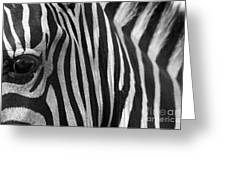 Extreme Close Up Of A Zebra Greeting Card