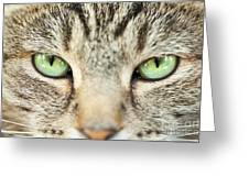 Extreme Close Up Tabby Cat Greeting Card