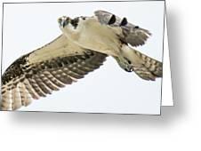 Eye-ball To Eye-ball With An Osprey Greeting Card