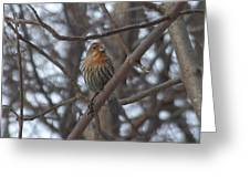 Eye-contact With The Rare - Orange Phase - House Finch Greeting Card
