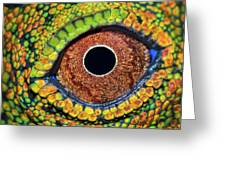 Eye Dragon Forest Greeting Card