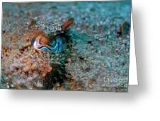 Eye Of A Common Cuttlefish Greeting Card by Sami Sarkis