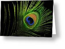 Eye Of A Peafowl Greeting Card